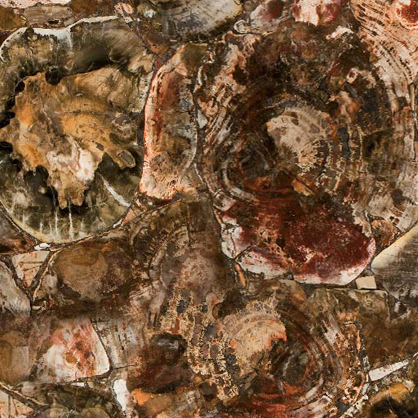 Concetto 8330 Petrified Wood Caesarstone